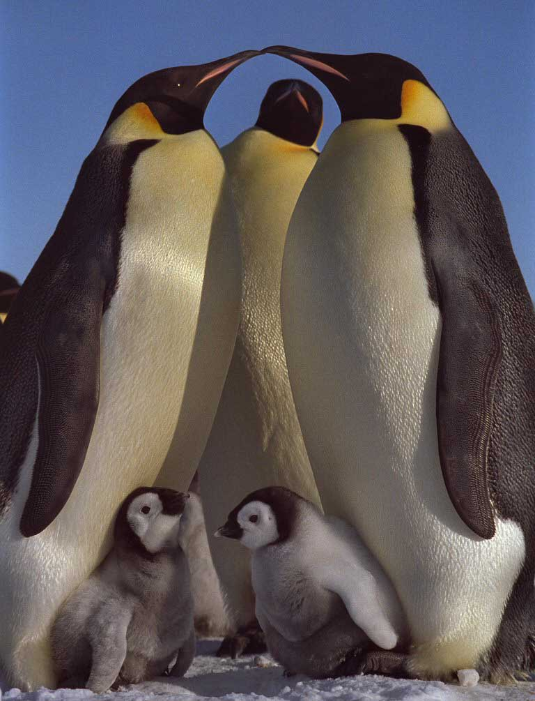 photo of emperor penguin rookery